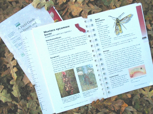 Read online} national-wildlife-federation-field-guide-to-insects.